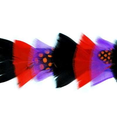 P4009 Black Purple & Red Feather Trim Pre-Cut 36