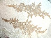 "Embroidered Lace Appliques Champagne Romantic Rose Floral Venice Lace Mirror Pair 16"" (DH83X)"