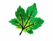 "Embroidered Leaf Applique Green Iron On Clothing Patch Craft Motif  3.125"" (GB563)"